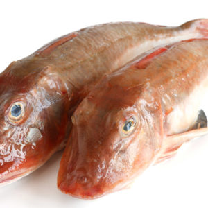 two fresh tub gurnard isolated on white background